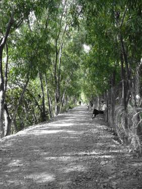 Walkway of reflection