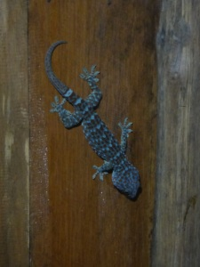 Ahhhhh the lovely gecko, mosquito killer!!! :-)