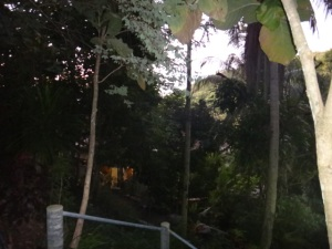 The retreat was set at the top of a hill on Koh Samui, it pretty much dense forest
