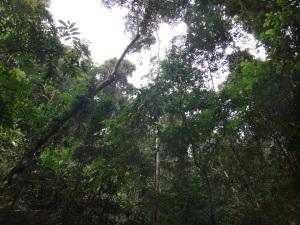 ...Inner inner jungle