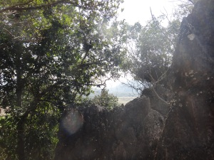 The view starting to materialise as we climbed through the tree canopy