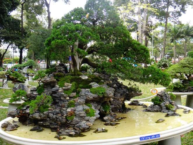Amazing examples of 'giant bonsai'!
