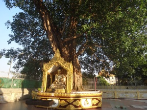 Golden Buddha under the Bodhi Tree, signifying the moment he reached enlightenment