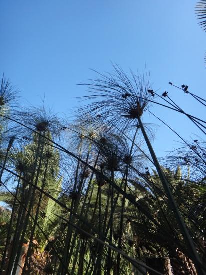 Tropical surroundings!